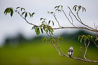 Jeceaba_MG, Brasil...Passaro no galho de uma arvore em Jeceaba, Minas Gerais...A bird on the branch tree in Jeceaba, Minas Gerais...Foto: JOAO MARCOS ROSA / NITRO