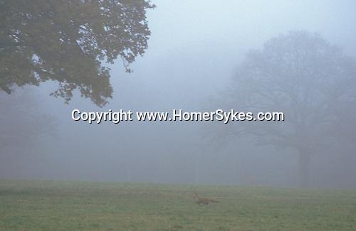 Badminton Gloucestershire private estate, Fox Hunting The Duke of Beaufort Hunt.  The English Season published by Pavilon Books 1987