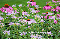 63821-22920 Purple Coneflowers (Echinacea purpurea) and Pink Bee Balm (Monarda didyma) Marion Co., IL