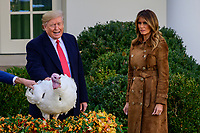 United States President Donald J. Trump pardons the National Thanksgiving Turkey in the Rose Garden of the White House in Washington, DC on Tuesday, November 26, 2019.  First lady Melania Trump looks on at right.<br /> CAP/MPI/RS<br /> ©RS/MPI/Capital Pictures