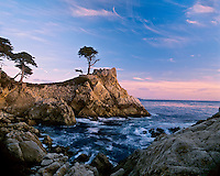 Lone cypress, landmark along California coastline, near Carmel.