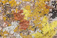 Dust & Crust Lichens