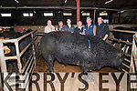 The Fatstock Supreme Champion at the Dingle Mart on Saturday afternoon. From left: Nelius McAuliffe (Dingle Mart Manager), Jack Garvey (owner), from An Riasc, Ballyferriter, Cathal Garvey, Tomas Callaghan (judge),  Padraig Ferriter (Dingle Mart Secretary), John Hallissey (judge).