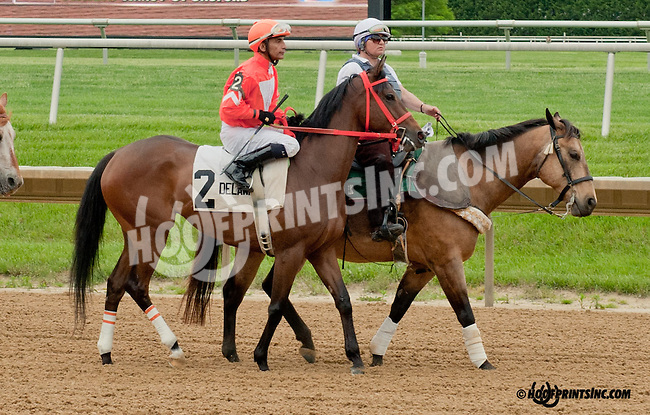 My Sonata before The Our Mims Stakes at Delaware Park on 5/18/13