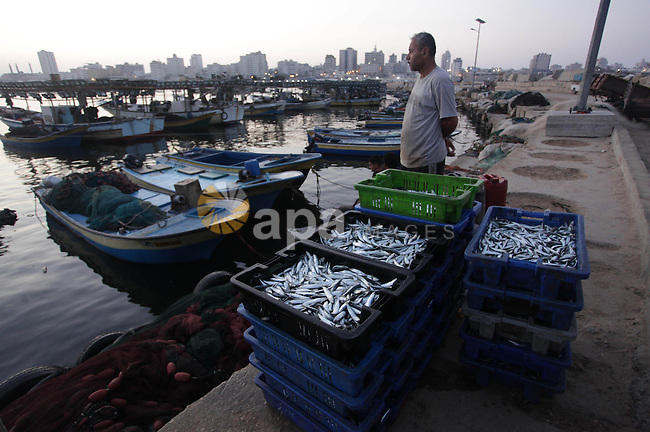 Palestinian fishermen display fish at a fish market at the Gaza seaport in the west of Gaza City, 02 September 2013. The Egyptian navy boats attacked the Palestinian boats off the southern Gaza Strip last Friday, near the border with Egypt, wounding fishermen and the arrest of 5 fishermen. Photo by Ashraf Amra
