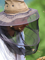Beekeeping operation: Portrait of Damien Blampey in an apiary near Favergue, France.<br /> Portrait de Damien Blampey sur son rucher près de Favergue- France.