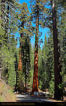Entrance to Mariposa Grove of Giant Sequoias, Yosemite National Park