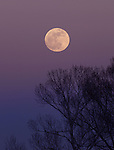 Wolf Moon<br /> The beautiful January Full Moon rises above the trees at the entrance to Coal Creek Canyon, Colorado