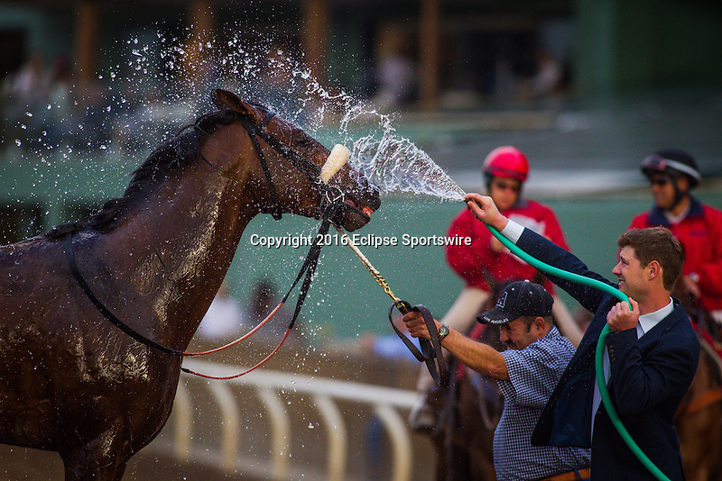 ARCADIA CA - March 12: Enffinex after the Santa Anita Handicap at Santa Anita Park on March 12, 2016 in Arcadia, California.(Photo by Zoe Metz/Eclipse Sportswire/Getty Images)