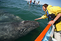 "pr0101-D. Gray Whales (Eschrichtius robustus). Baja, Mexico, Pacific Ocean. ""Friendlies""- mom behind and underwater, baby in front-  approach boat and make contact with happy tourist (model released)..Photo Copyright © Brandon Cole. All rights reserved worldwide.  www.brandoncole.com..This photo is NOT free. It is NOT in the public domain. This photo is a Copyrighted Work, registered with the US Copyright Office. .Rights to reproduction of photograph granted only upon payment in full of agreed upon licensing fee. Any use of this photo prior to such payment is an infringement of copyright and punishable by fines up to  $150,000 USD...Brandon Cole.MARINE PHOTOGRAPHY.http://www.brandoncole.com.email: brandoncole@msn.com.4917 N. Boeing Rd..Spokane Valley, WA  99206  USA.tel: 509-535-3489"