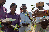 A group of guar farmers attends a Technoserve field training in the Technoserve Guar Demo Plot in Kheeyara village, Bikaner, Rajasthan, India on October 24th, 2016. Non-profit organisation Technoserve works with farmers in Bikaner, providing technical support and training, causing increased yield from implementation of good agricultural practices as well as a switch to using better grains better suited to the given climate. Photograph by Suzanne Lee for Technoserve