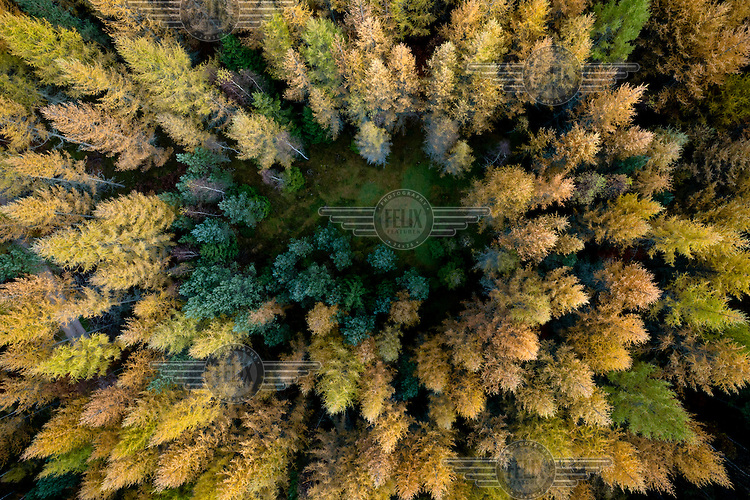A view of a clearing amongst trees changing colour in Autumn in a forest in Kashubia...