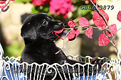 Bob, ANIMALS, REALISTISCHE TIERE, ANIMALES REALISTICOS, dogs, photos+++++,GBLA3879,#a#, EVERYDAY