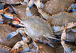 Washington DC; USA: Blue crabs from the Chesapeake at the Maine Avenue Fish Market.Photo copyright Lee Foster Photo # 26-washdc82735