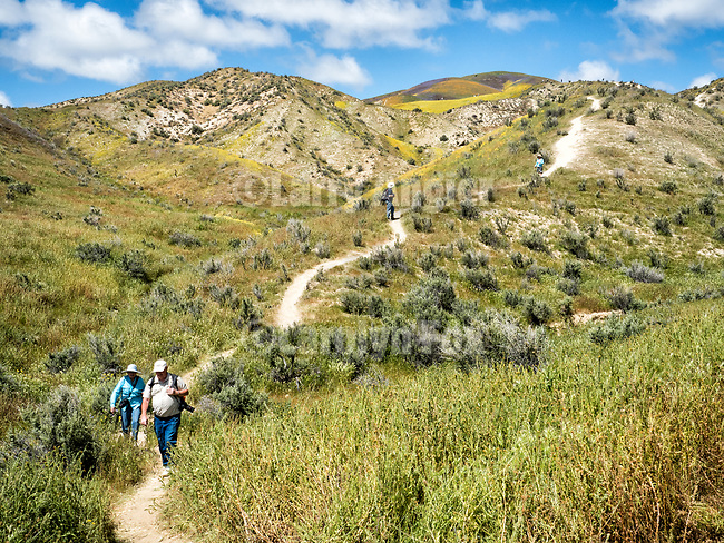 A make-shift trail climbs to a ridge below an unnamed canyon for viewing the colorful wildflowers covering the Temblor Range, Carrizo Plain National Monument, San Luis Obispo County, Calif.