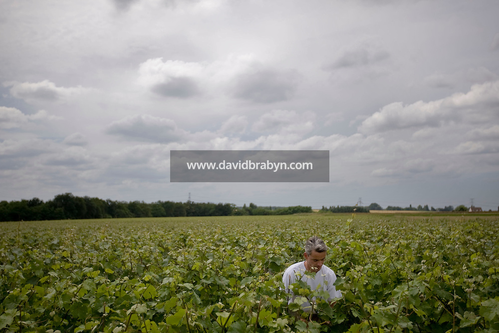 Gregory Royer works in his vineyards outside Vouvray, France, 26 June 2008.