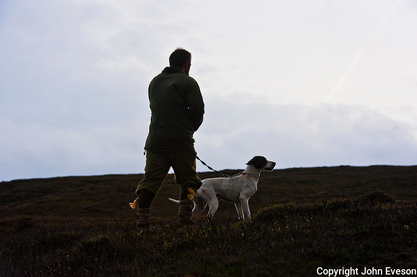 Man with Pointer dog counting grouse on a grouse moor, West Yorkshire.