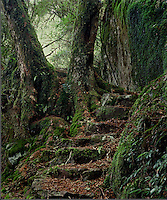 Beech Forest Stairs<br /> New England NP<br /> NSW