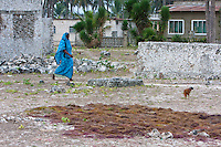 Jambiani, Zanzibar, Tanzania.  Morning Village Scene, Seaweed Drying in Foreground.