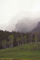 Spring squalls sweeps into the peaks around Pebble Creek Campground. NE corner of Yellowstone along the NE Entrance road.