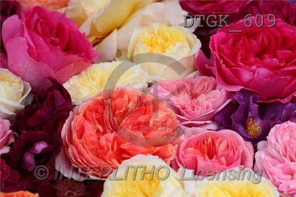 Gisela, FLOWERS, photos(DTGK609,#F#) Blumen, flores, retrato