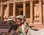 A camel in front of Al Khazneh or the Treasury in the Nabataean city of Petra in the Hashemite Kingdom of Jordan.  Petra Archeological Park is a Jordanian National Park and a UNESCO World Heritage Site.