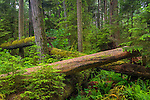 Vancouver Island, British Columbia, Canada: Cathedral Grove old Growth forest, MacMillan Provincial Park