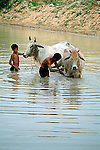 FATHER & SON WASH WATER BUFFALO<br />
