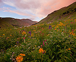 San Juan Mountains, CO<br /> Sunset clouds illuminate a wildflower meadow in American Basin featuring paintbrush (Castilleja rhexifolia), delphinium (Delphinium barbeyi) and sneezeweed (Dugaldia hoopesii)