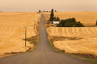 Rural Rolling Country Road throught Wheat Fields of Davenport, WA, USA.
