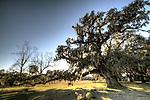 McLeod Plantation on James Island South Carolina with Live Oak Trees, spanish Moss and Historic Slave Houses