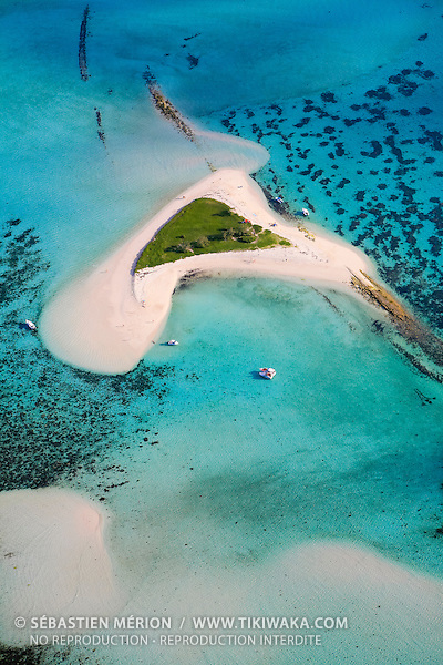 L'île aux Goélands, située à une dizaine de kilomètres de Nouméa est une réserve de faune et un site de reproductions pour les Sternes de Dougall. L'îlot peut héberger l'une des plus grandes colonies au monde, jusqu'à 4 000 couples viennent y pondre, pour une population mondiale estimée à 55 000 couples.