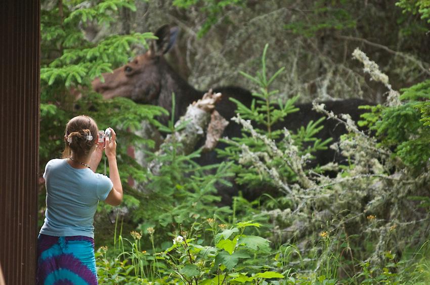 Visitors to Isle Royale National Park observe moose at Rock Harbor.
