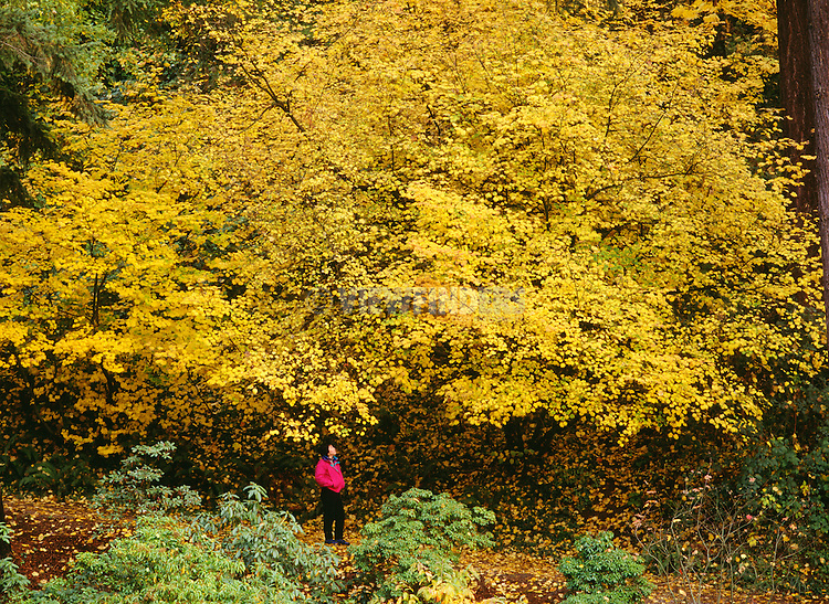 Young woman pauses to view autumn colors in Mt. Tabor park, Portland, Oregon