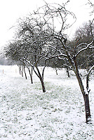 Hertfordshire - Snow scenes in Hertfordshire. Pictured - Snow covered orchard near Letchworth - January 18th 2012..Photo by Keith Mayhew