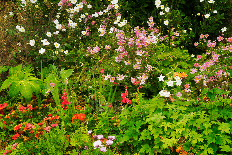 Mixed flowers garden. Gardens at Domoland Castle. Ireland