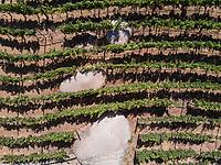 Viñas de Garza winery. Valle de Guadalupe, Baja California Norte, Mexico