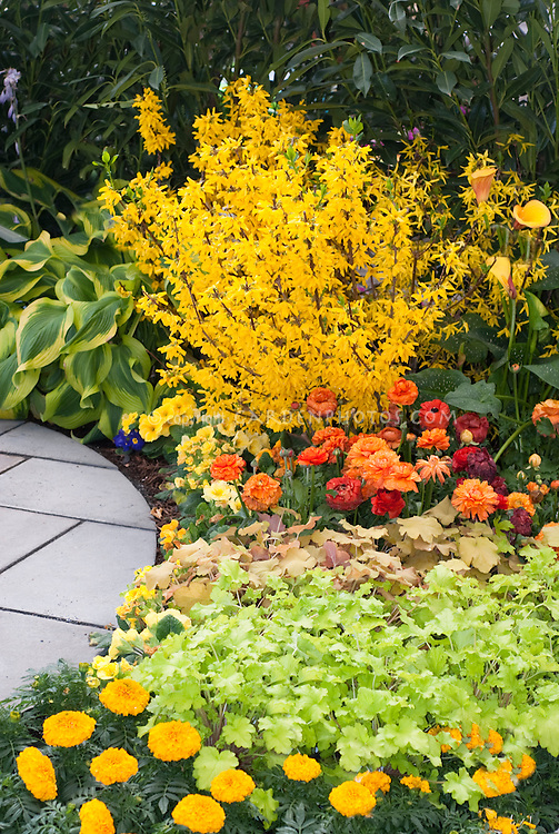 Forsythia heuchera marigolds in garden plant flower for Flowering landscape plants