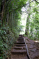 Steps of hiking trail leading through bamboo forest in Manoa Valley, Oahu