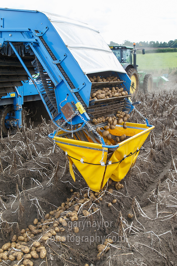 Windrowing opening with a Standen T3 and fall breaker - Lincolnshire, September