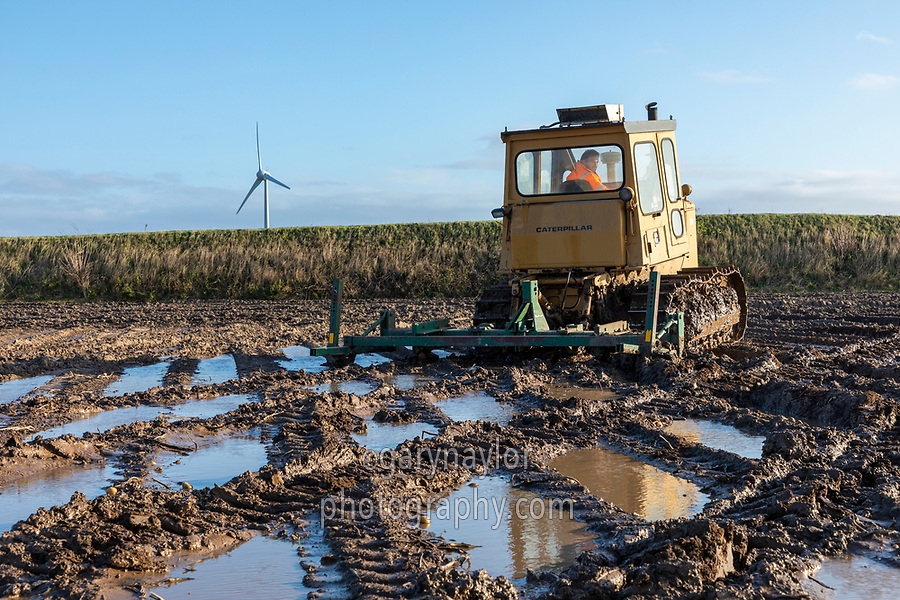 CAT D6 pulling twin subsoiler on harvested potato field following heavy rainfall  to allow water to infiltrate - Lincolnshire, December