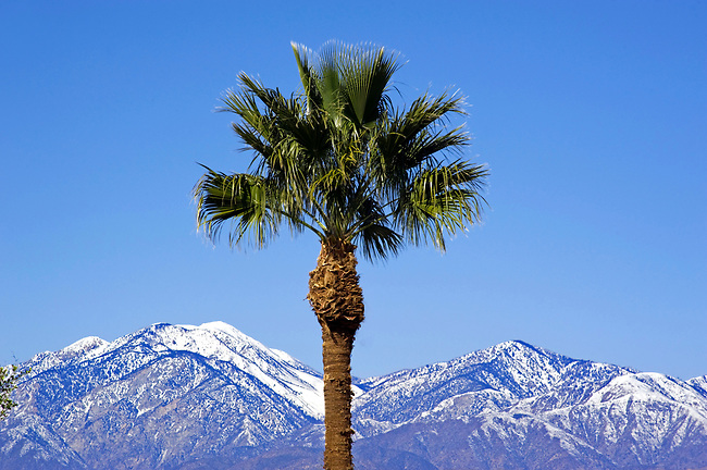Palm tree and mountains with snow near Palm Springs, CA