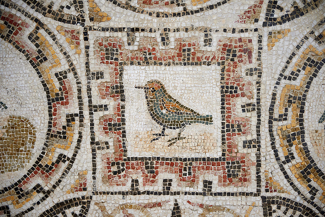 Picture of a Roman mosaics design depicting shells and birds, from the ancient Roman city of Thysdrus. 3rd century AD, House of Selinus. El Djem Archaeological Museum, El Djem, Tunisia.