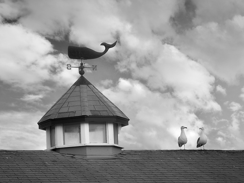 Seagulls on roof top with whale weather vain. Fisherman's Warf. Monterey, California