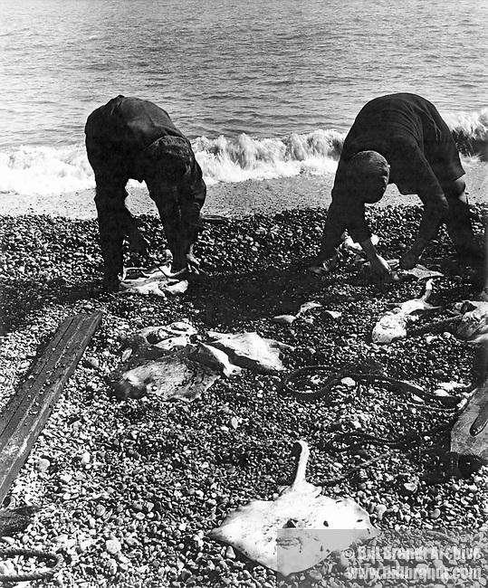 Fishermen and catch Aldeburgh beach