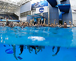 GREENSBORO, NC - MARCH 17: The NCAA Champion Queens University of Charlotte Royals Men's and Women's Swimming and Diving teams celebrate in the diving well following their victories in the Division II Men's and Women's Swimming & Diving Championship held at the Greensboro Aquatic Center on March 17, 2018 in Greensboro, North Carolina. (Photo by Mike Comer/NCAA Photos/NCAA Photos via Getty Images)