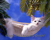 Xavier, ANIMALS, REALISTISCHE TIERE, ANIMALES REALISTICOS, cats, photos+++++,SPCHCATS918,#a#, EVERYDAY