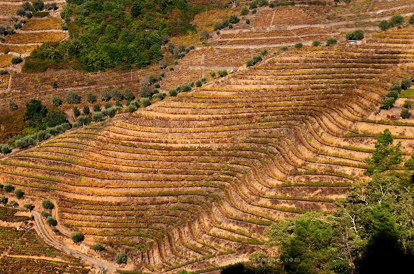 vineyards quinta da gaivosa douro portugal