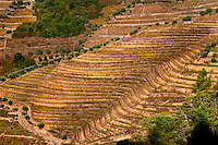 vineyards quinta da gaivosa douro portugal