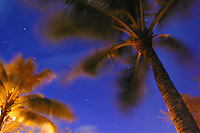Palm trees fronds blown in the wind. Shot at night with stars in the background.